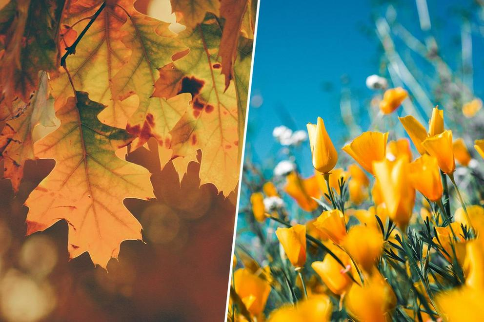 Which season makes you happier: fall or spring?