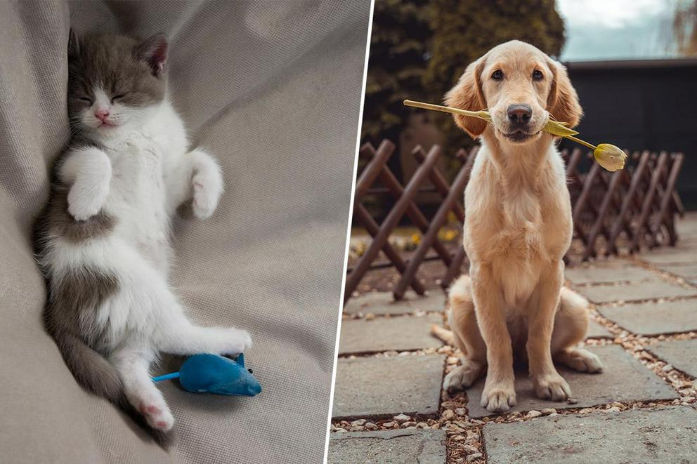 Which makes for the better pet: cats or dogs?