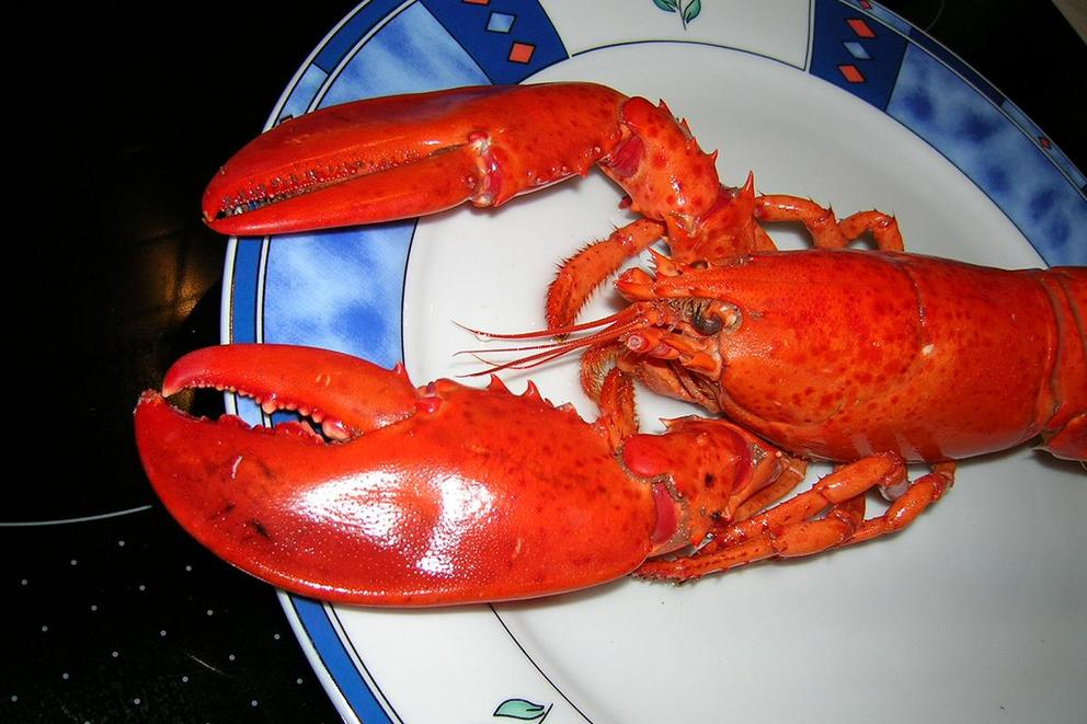 Should cooks be banned from boiling lobsters?