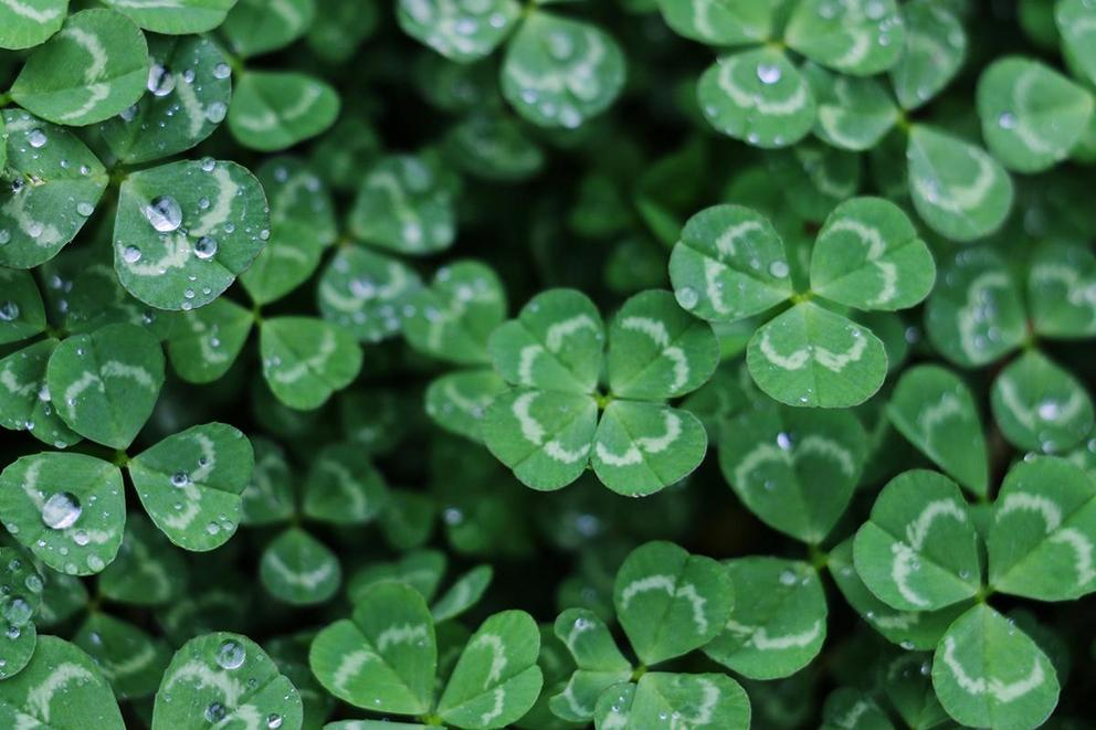 St. Patrick's Day: How will you be celebrating?