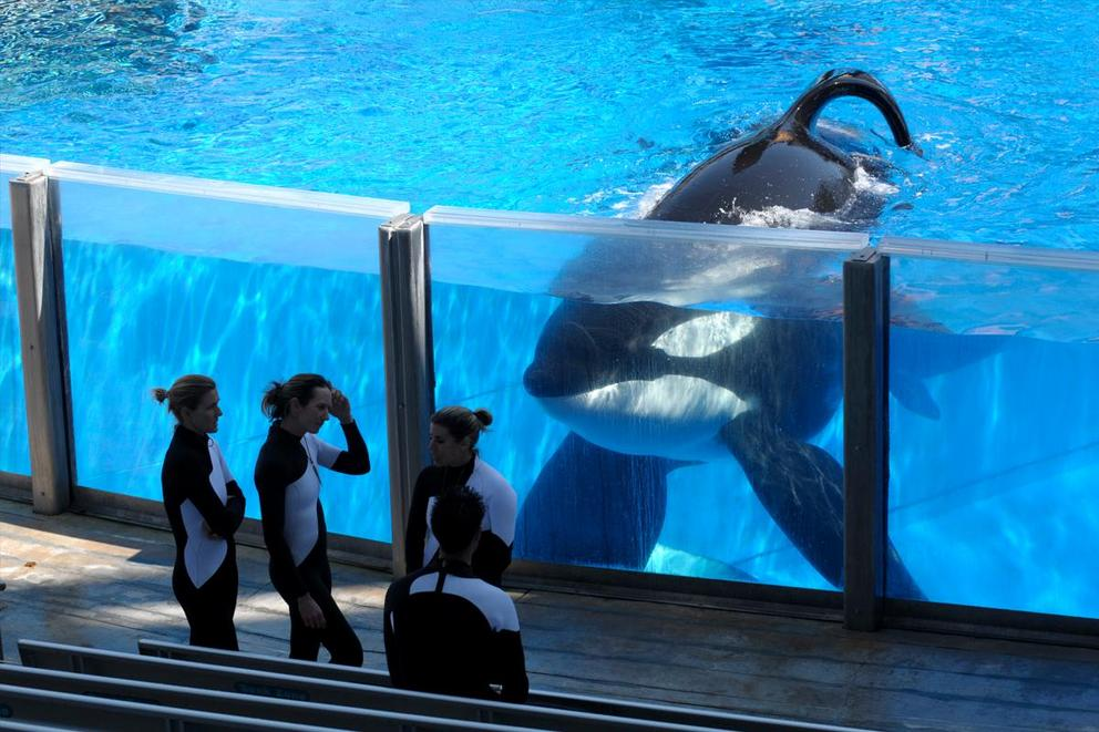 Should SeaWorld be closed down?