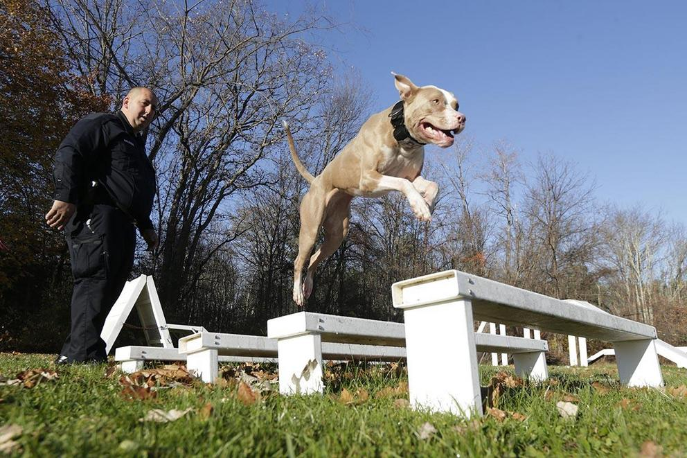 Are pit bulls too dangerous to own as pets?