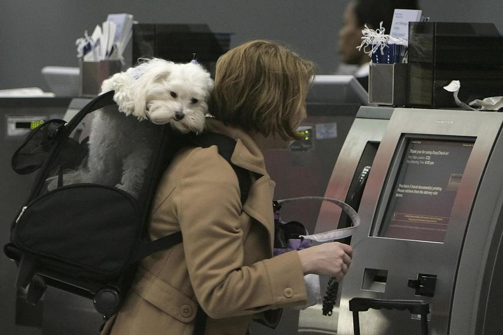 Is it time to ban emotional support animals?