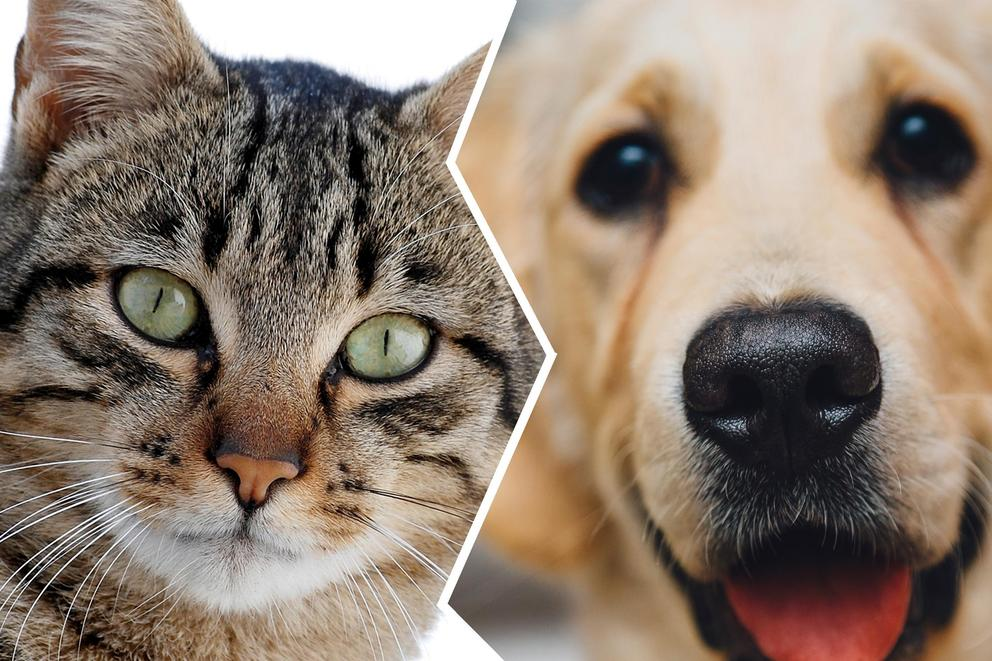 Cats are from Venus, dogs are from Mars. Which do you prefer?