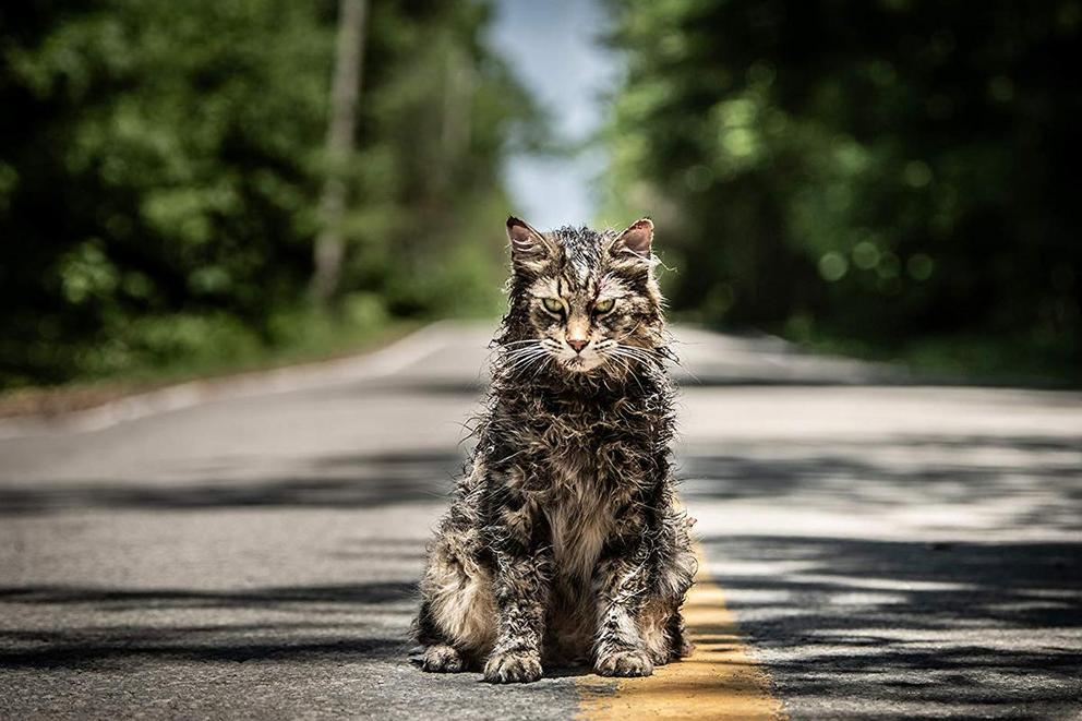 Would you bury your favorite animal in a 'Pet Sematary'?