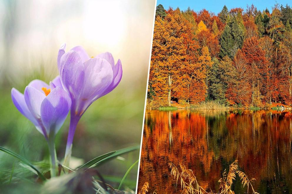Which season makes you happier: Spring or fall?