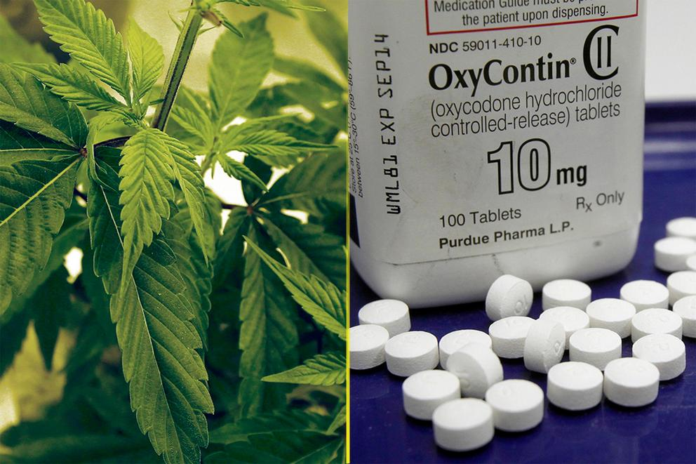 Could marijuana help solve the opioid crisis?