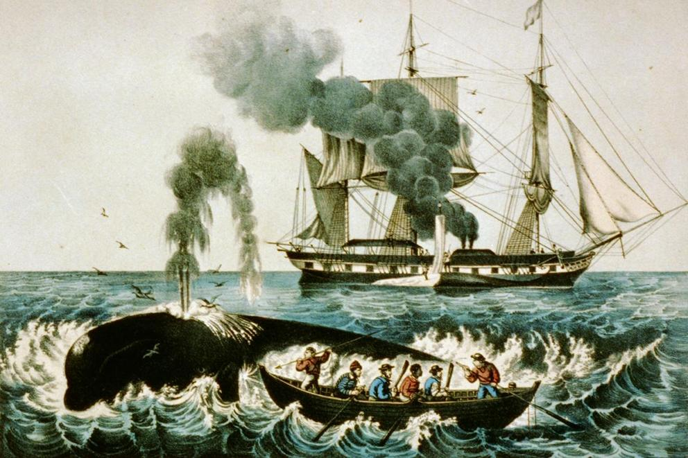 Should whaling be banned internationally?