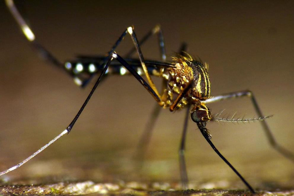 Should we eradicate mosquitoes?