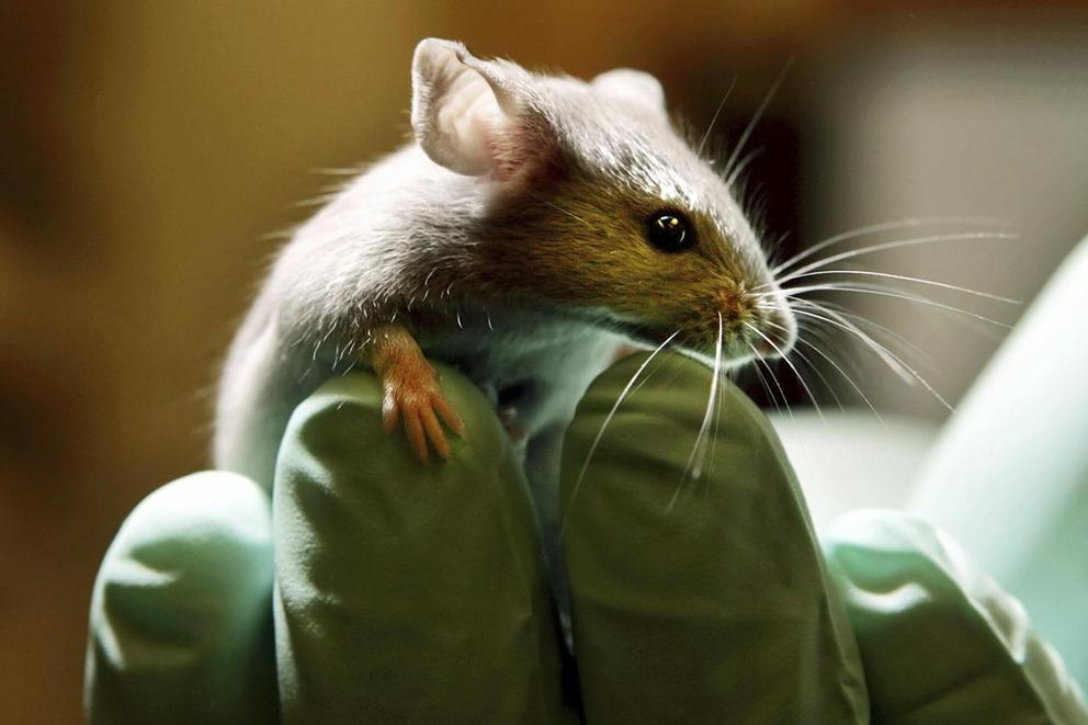 Should animal testing be outlawed?
