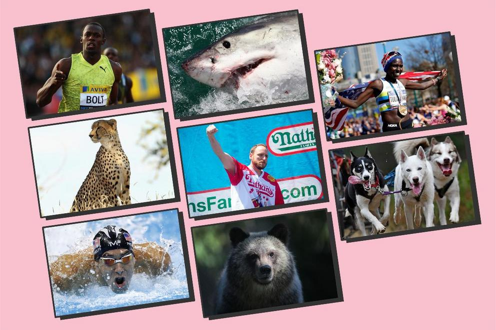 Can the world's best athletes beat the greatest animals in some friendly competition?