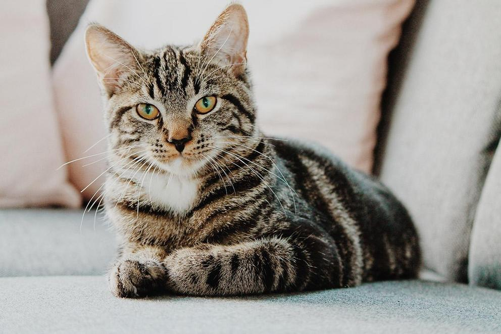 Should cat declawing be banned?