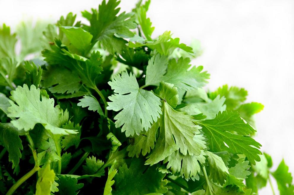 Is cilantro disgusting?