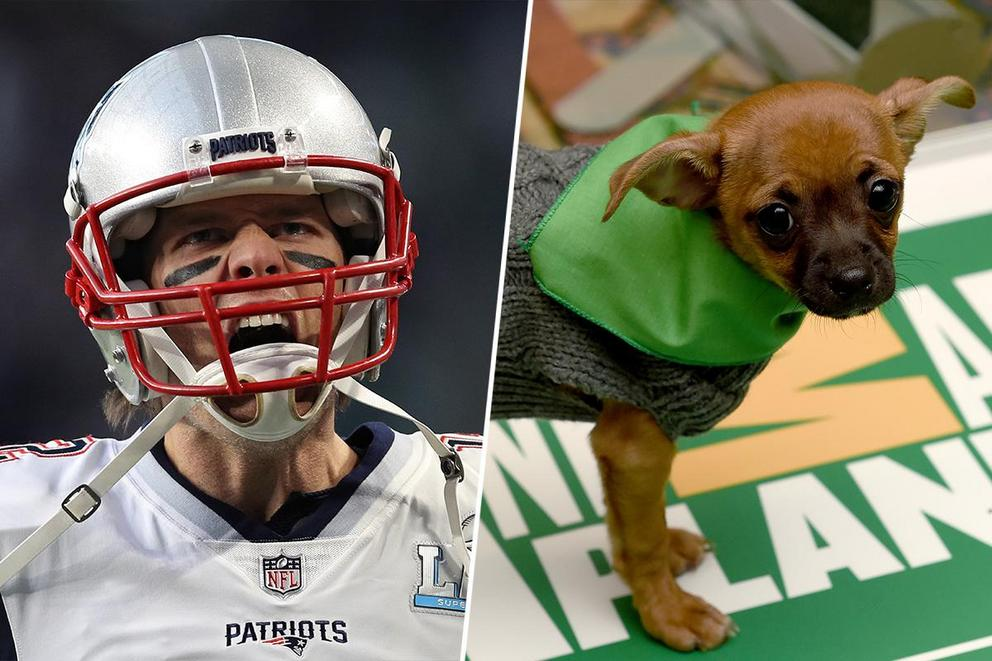 What's your favorite Super Sunday event: the Super Bowl or the Puppy Bowl?