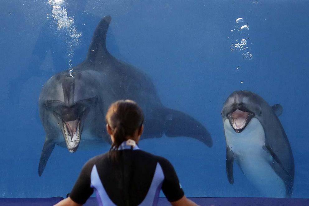 Is it wrong to keep dolphins captive?