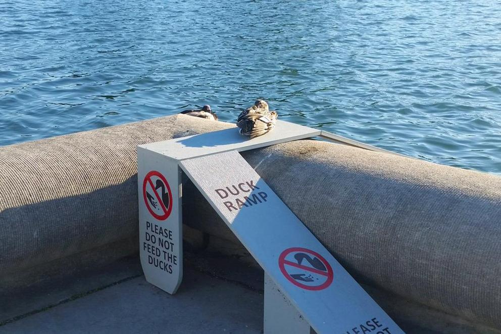 Are duck ramps awesome or a waste of taxpayer dollars?