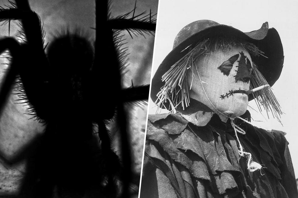 Which 'Scary Stories to Tell in the Dark' tale scared you most: 'The Red Spot' or 'Harold'?