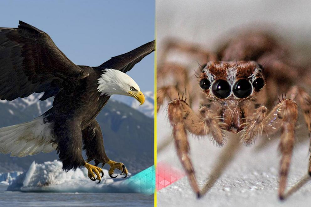 Would you rather ride a giant bird or a giant spider?