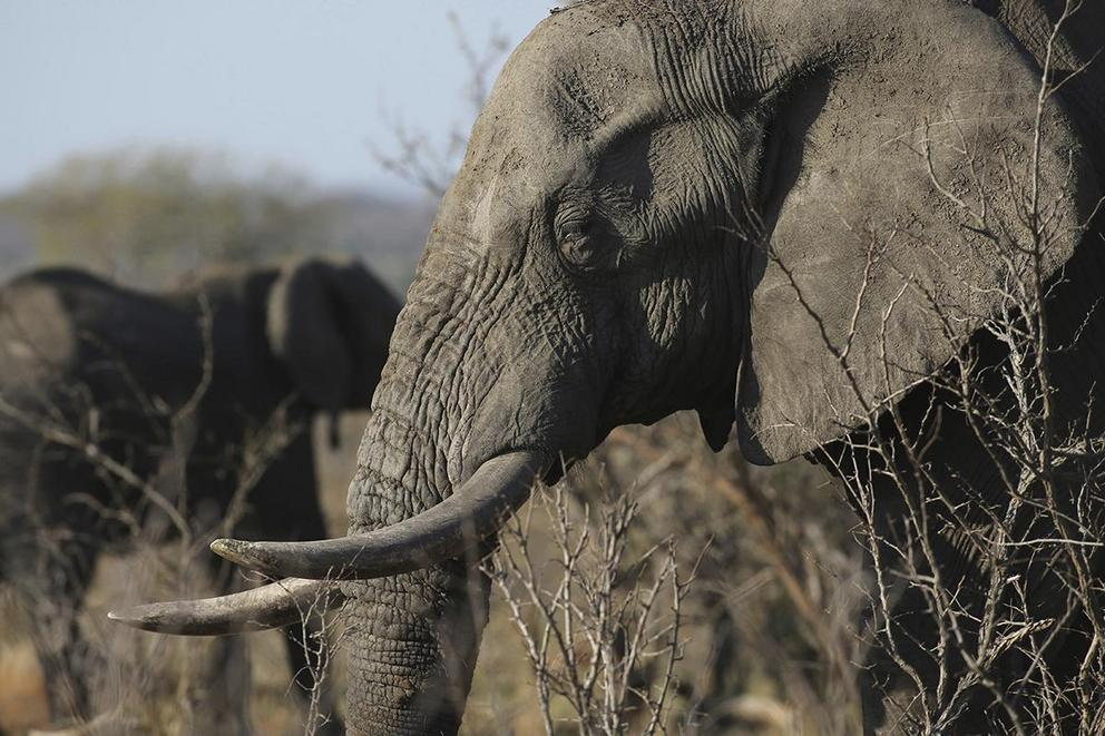 Should trophy hunting be banned?