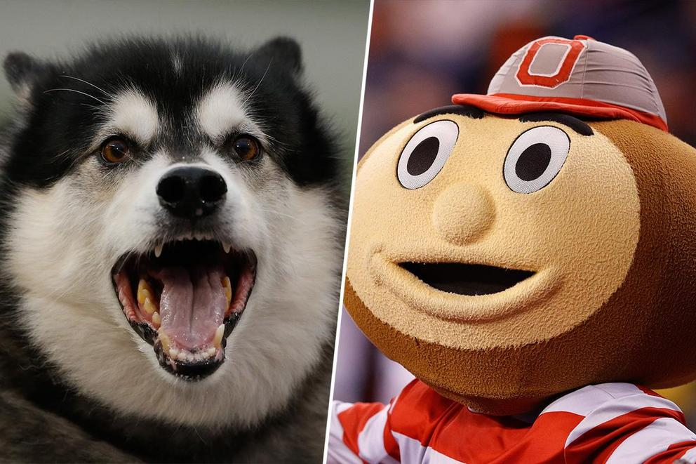 Best college mascot: Dubs or Brutus?