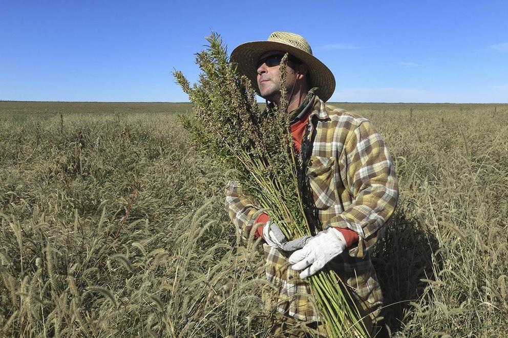 Should hemp be legalized?