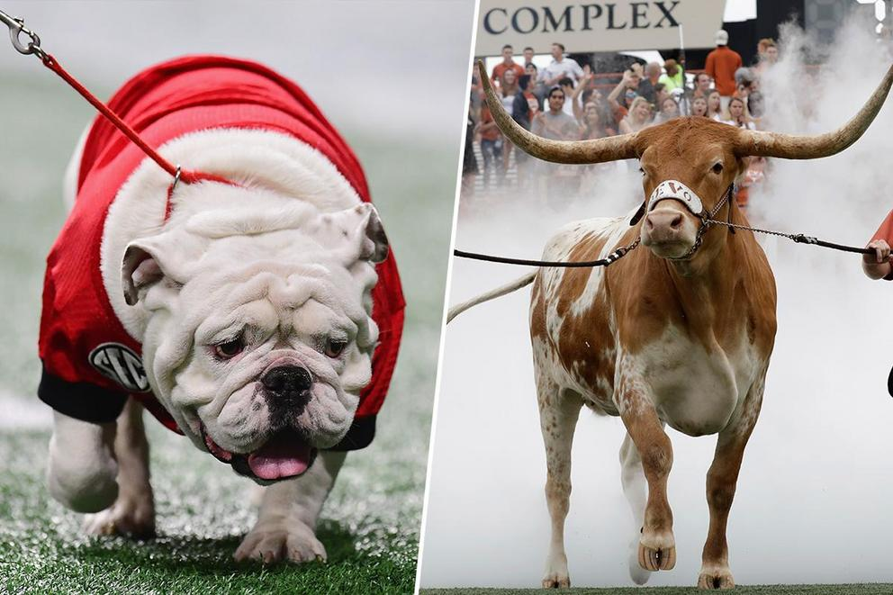 Best college mascot: Uga or Bevo?