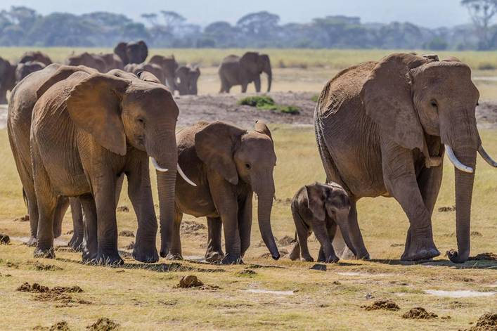 Should the U.S. ban hunters from importing elephant trophies?