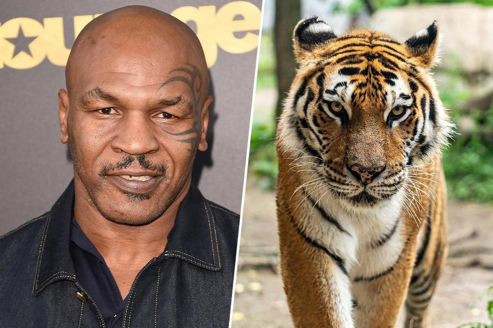 Who would win in a fight: Mike Tyson or a tiger?